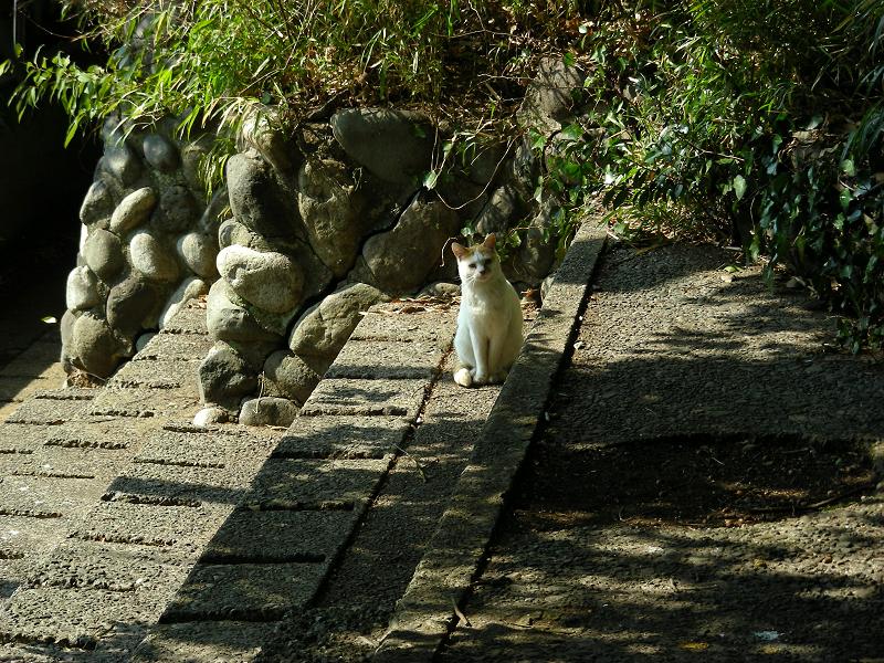 公園のスタンドの白茶猫2