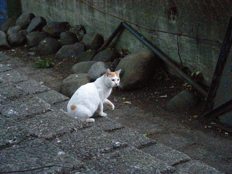 朝いち猫と夕暮れに再会2