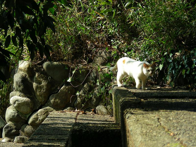 公園のスタンドの白茶猫3