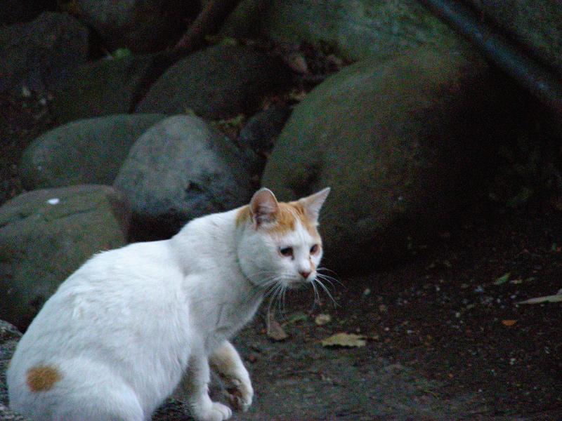 朝いち猫と夕暮れに再会3