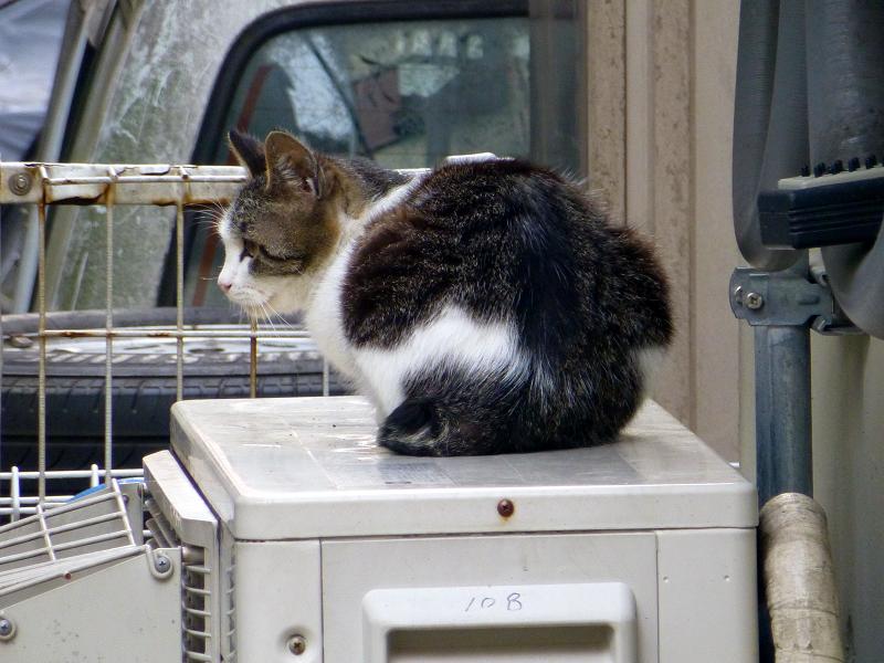 室外機上のキジ白猫2