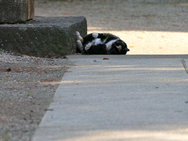 鳥居台座参道と三毛猫1