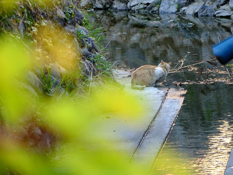 水飲み場の猫2