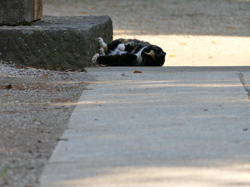 鳥居台座参道と三毛猫2