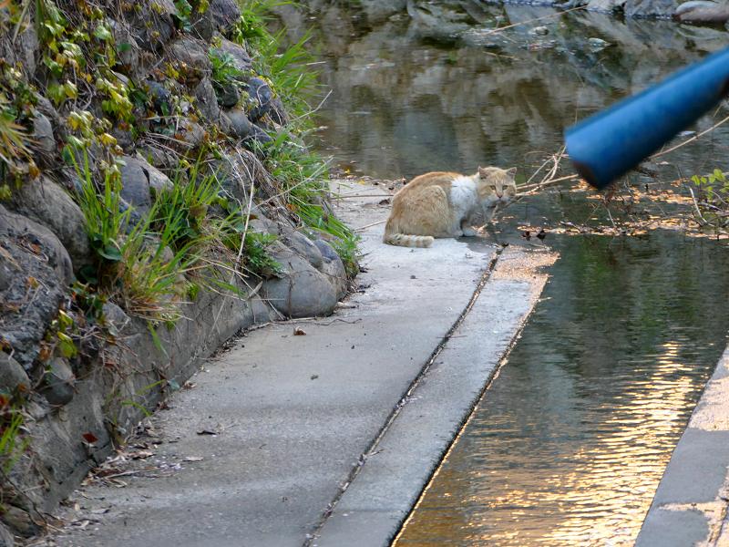 水飲み場の猫3