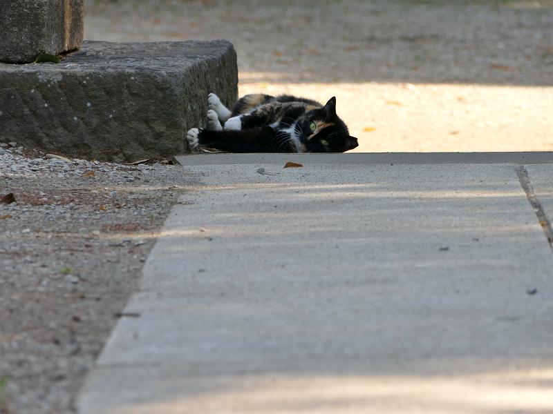 鳥居台座参道と三毛猫3