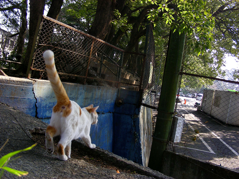 逃げ去る白茶猫1