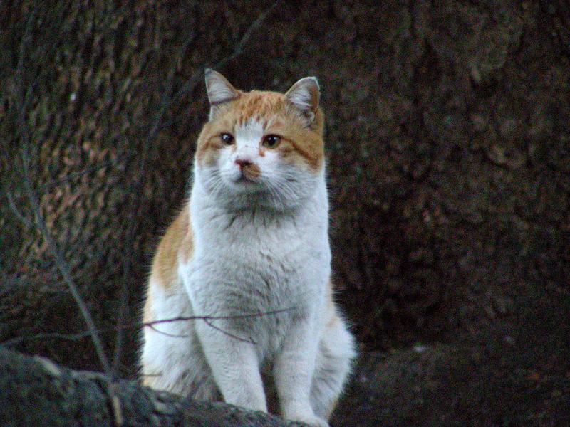 見上げればボス猫風猫2
