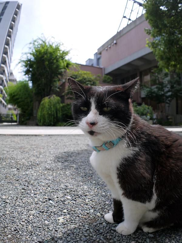 腰をトントンをせがむ黒白猫2