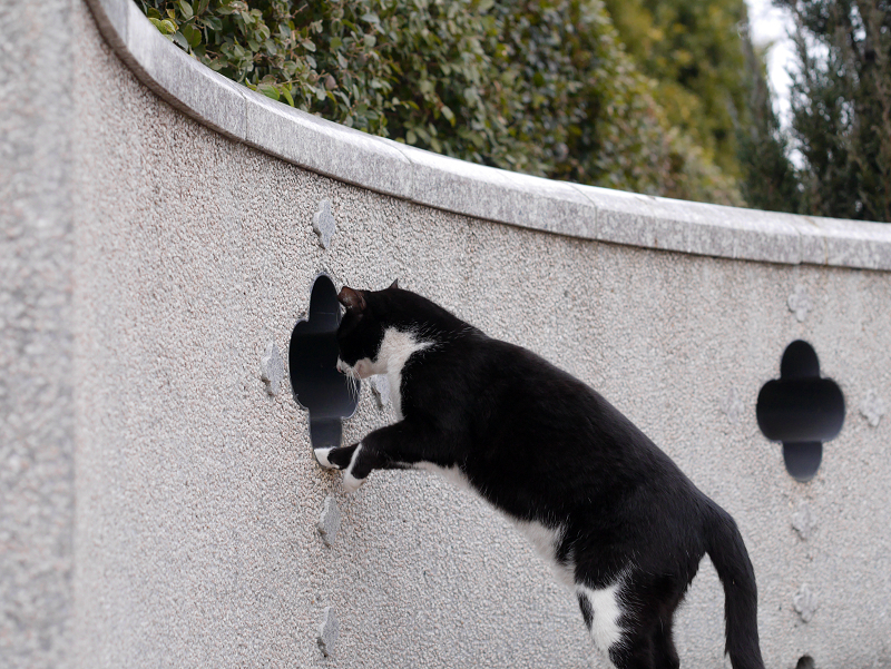 壁の穴と黒白猫1