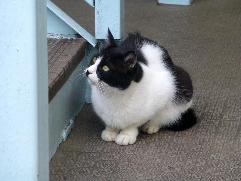 階段下の黒白猫1