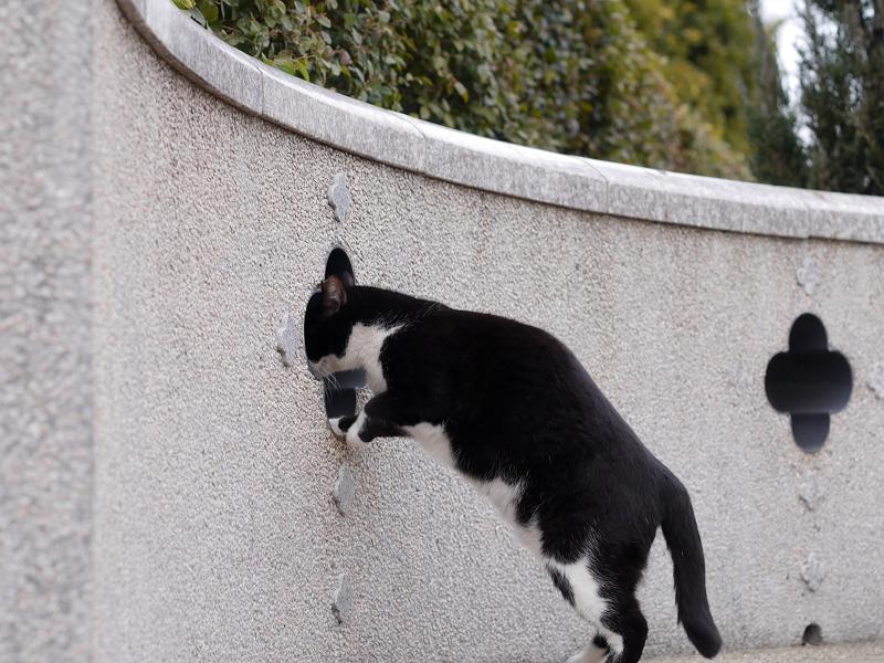 壁の穴と黒白猫2