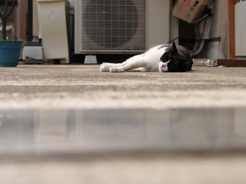 暑い日に寝ている猫2