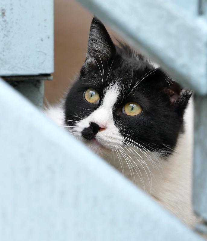 階段下の黒白猫2