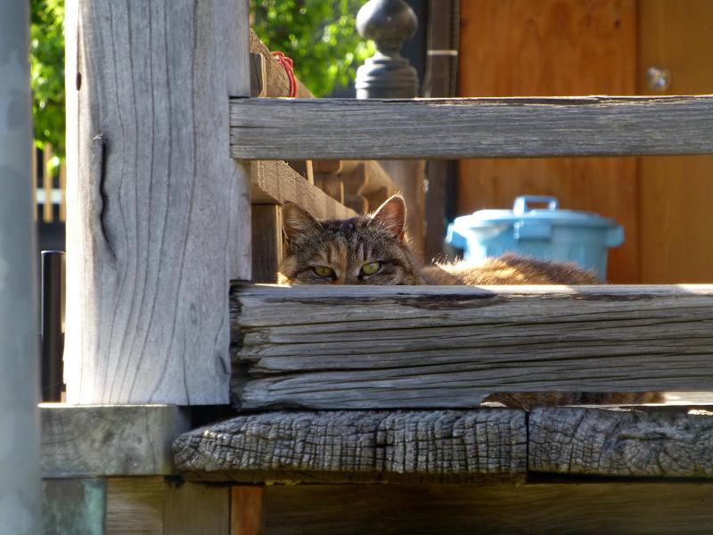 欄干隙間のキジトラ猫2