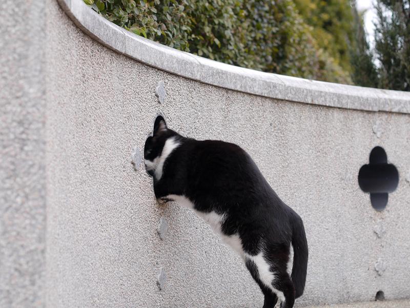 壁の穴と黒白猫3