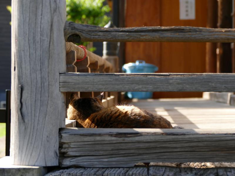 欄干隙間のキジトラ猫3