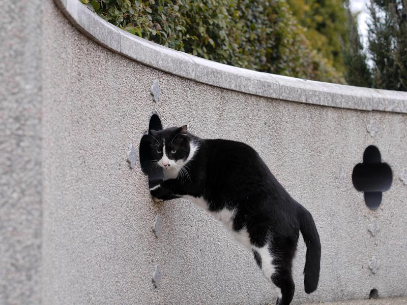 壁の穴と黒白猫4