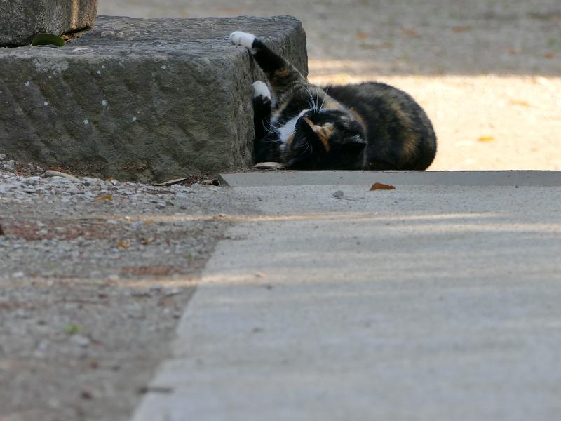 鳥居台座ローアングル三毛猫1