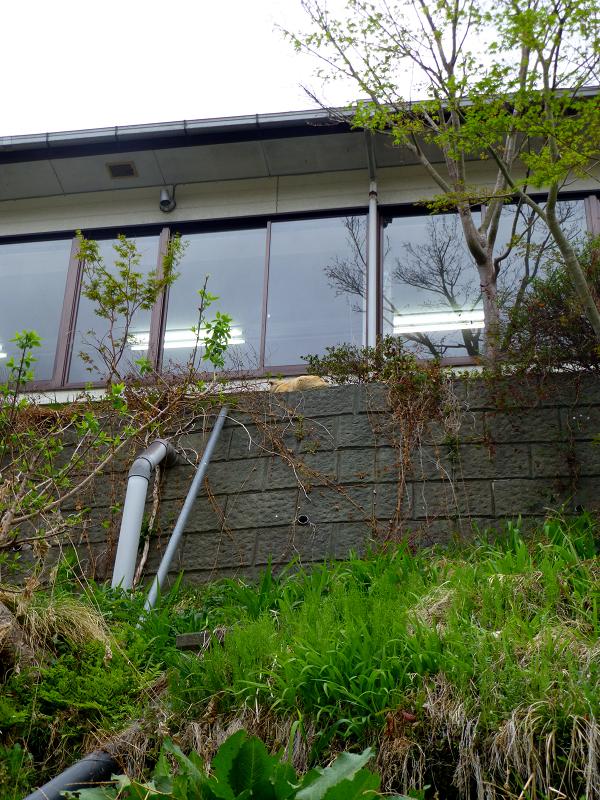 お店の窓と茶トラ猫1