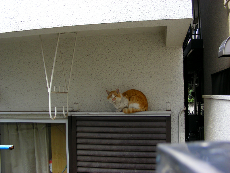 戸袋の茶白猫1