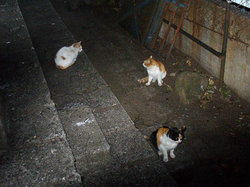 夕暮れ猫の集会1