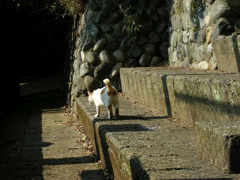 戻ってきた白茶猫2