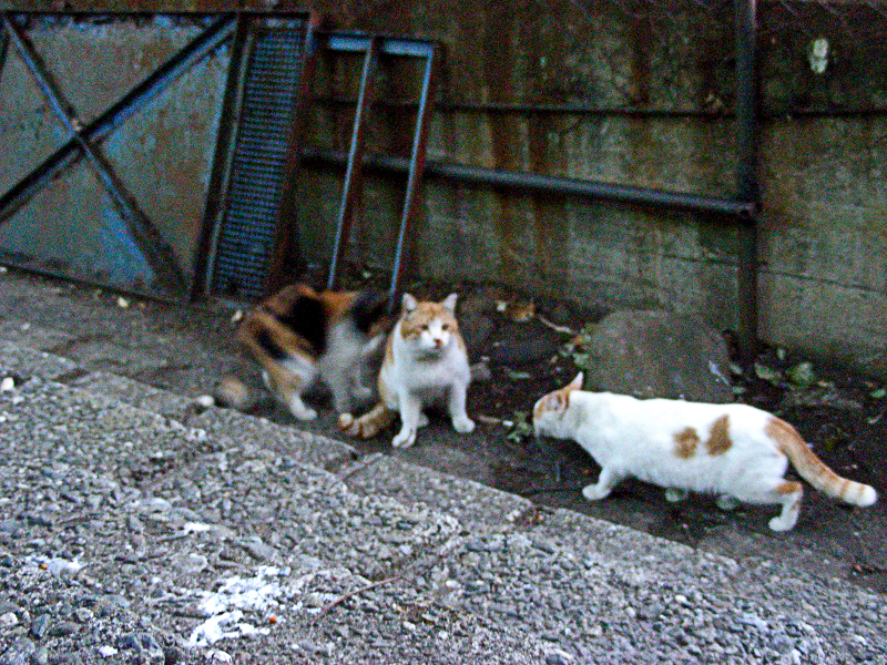 夕暮れ猫の集会2