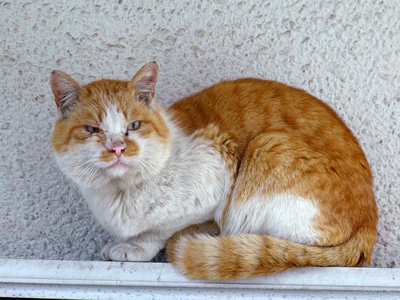 戸袋の茶白猫2
