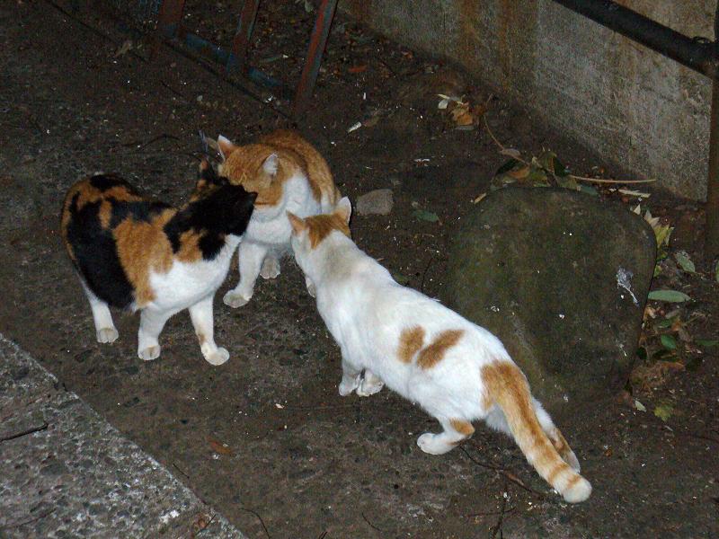 夕暮れ猫の集会3