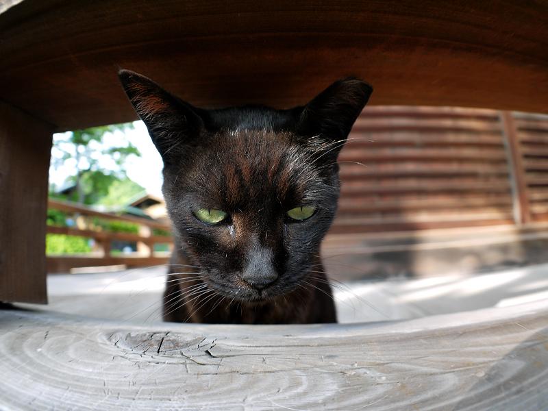 欄干隙間の黒猫1