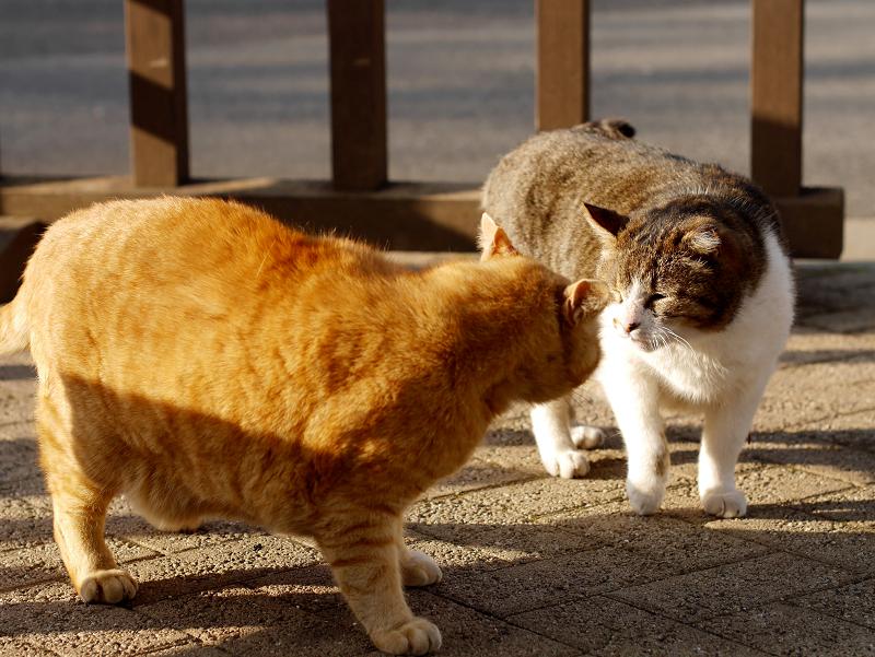 威嚇し合う猫たち1
