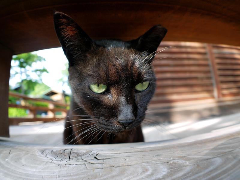 欄干隙間の黒猫2