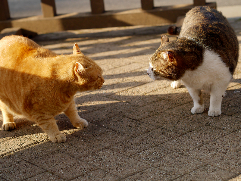 威嚇し合う猫たち2