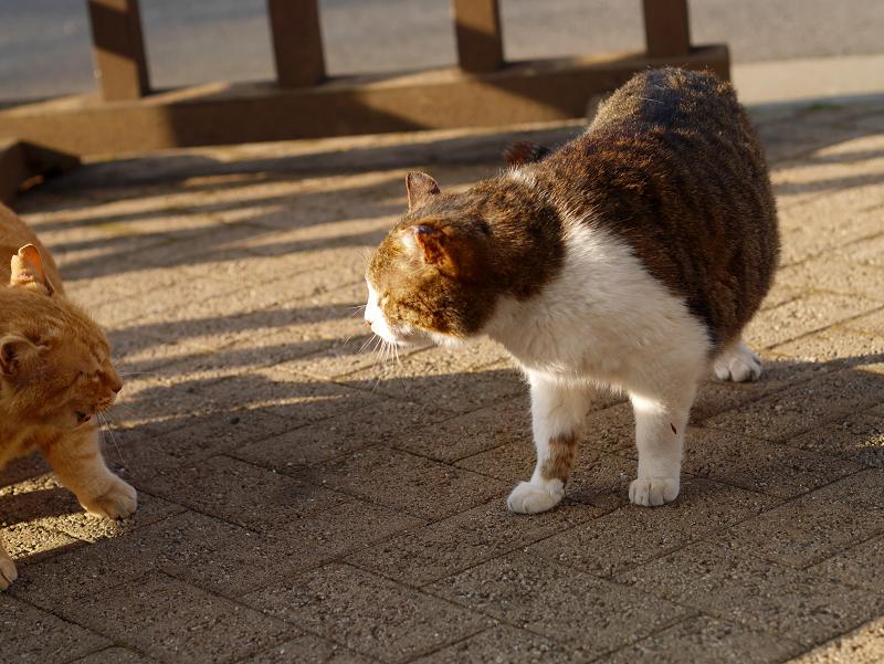 威嚇し合う猫たち3