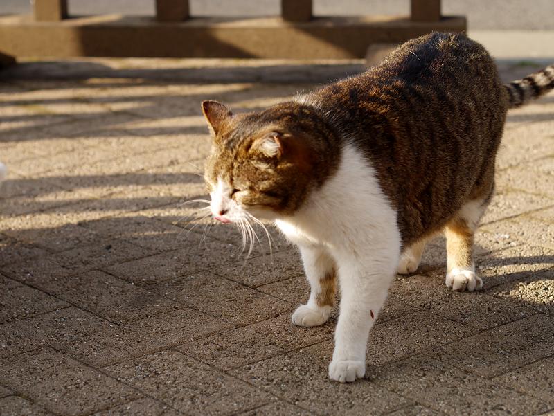 威嚇し合う猫たち4