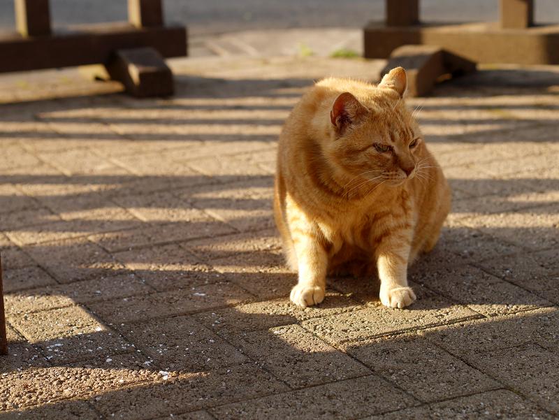 威嚇し合う猫たち5
