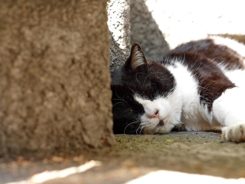 ひっそりと寝ていた黒白猫1