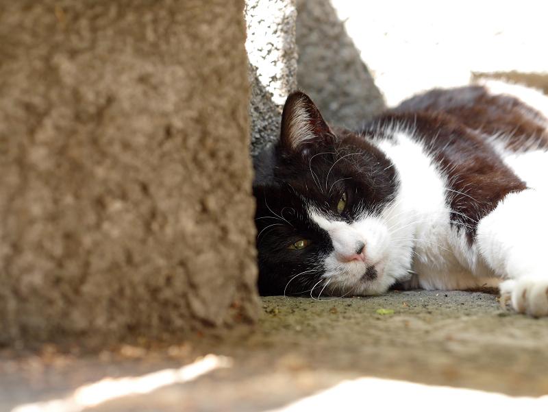 ひっそりと寝ていた黒白猫2