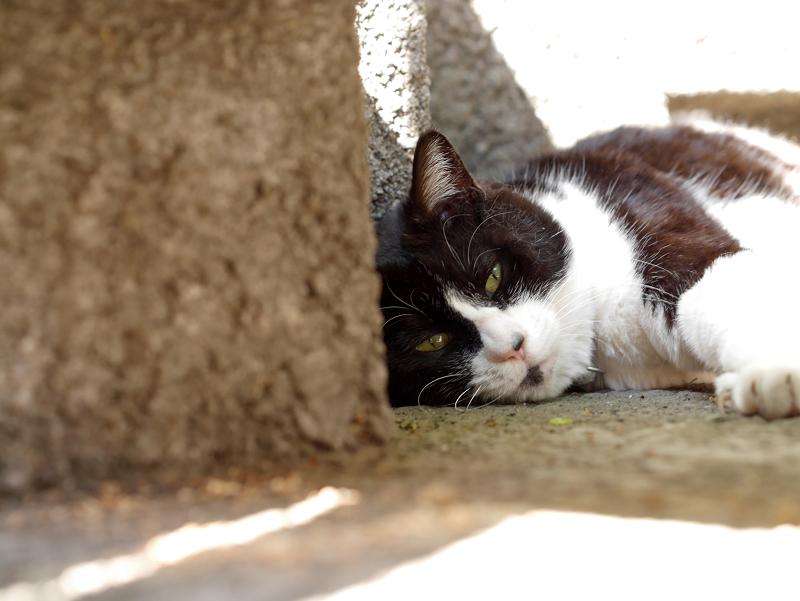 ひっそりと寝ていた黒白猫3