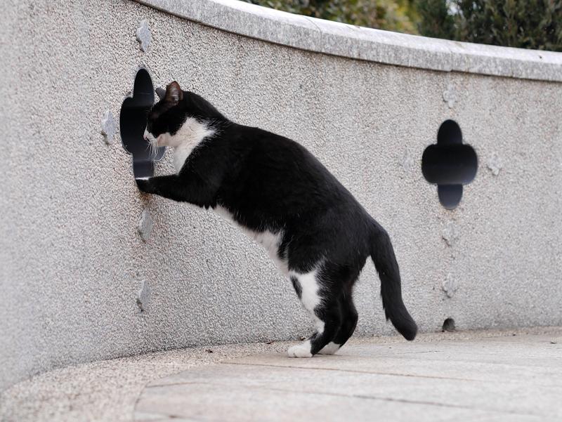 壁の飾り窓と黒白猫1