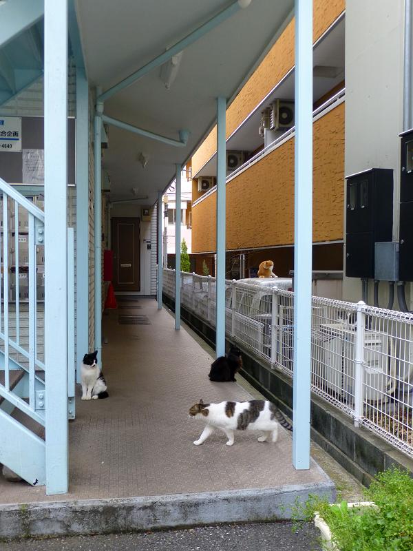 アパート廊下の猫たち1