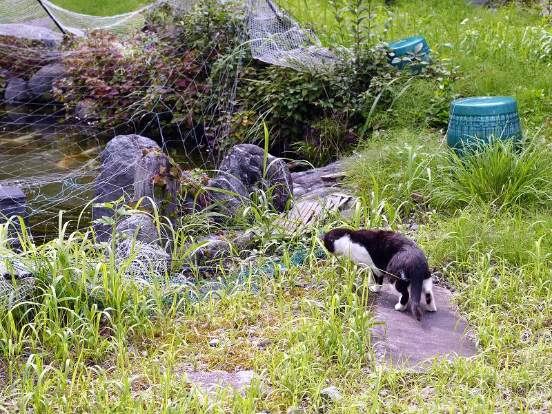 草叢で虫に夢中な黒白猫2