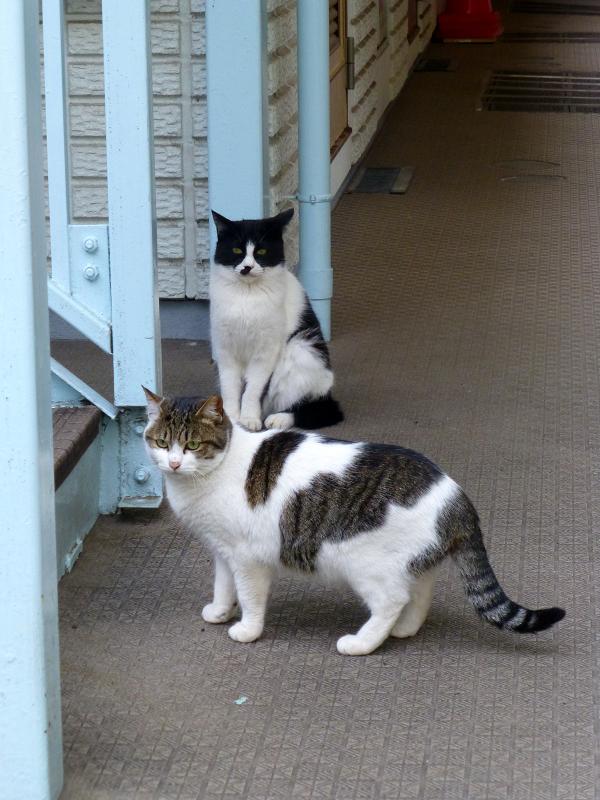アパート廊下の猫たち2