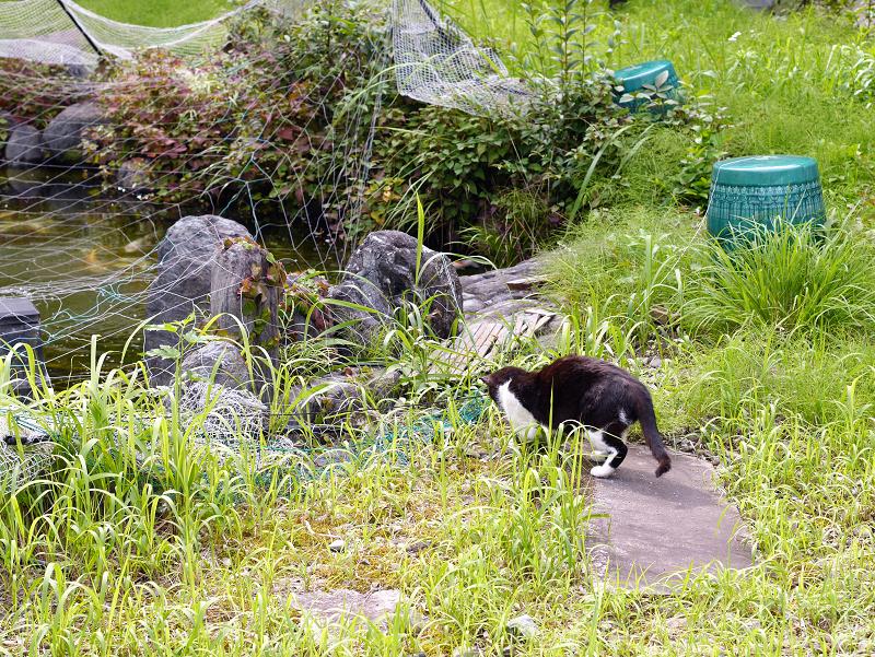 草叢で虫に夢中な黒白猫3