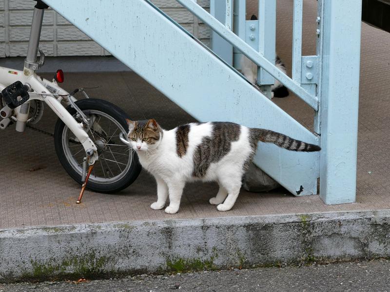 アパート廊下の猫たち3