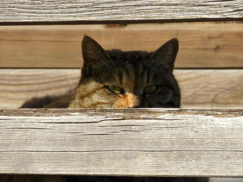 欄干に寄り掛かるキジトラ猫3
