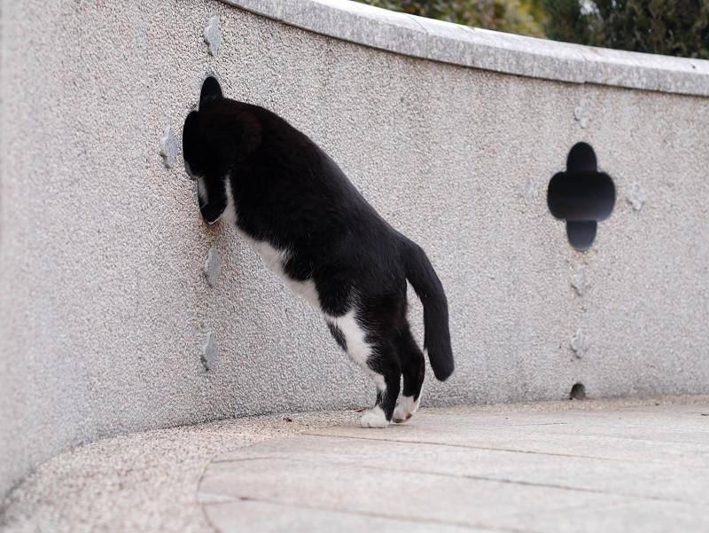 壁の飾り窓と黒白猫4