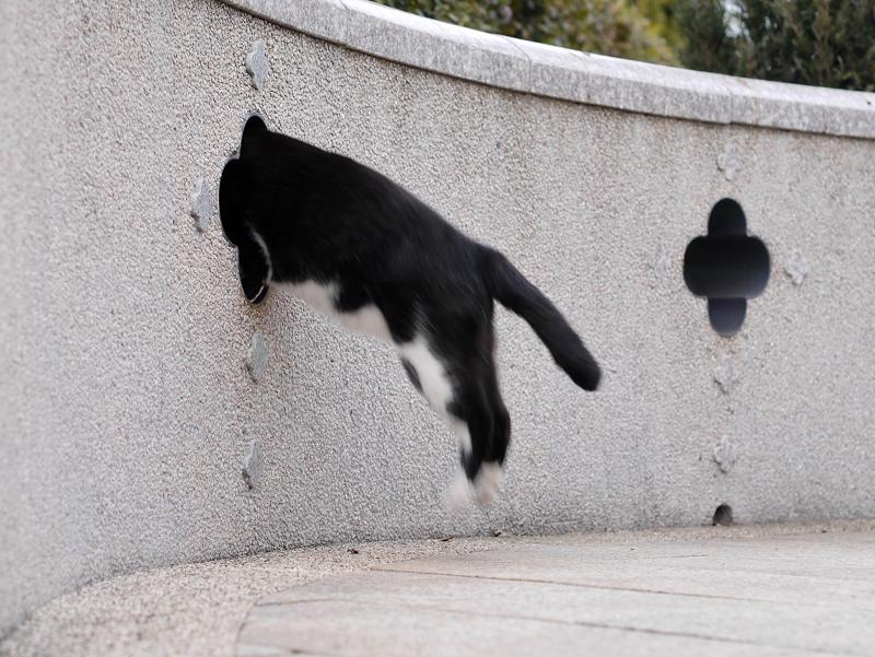 壁の飾り窓と黒白猫5