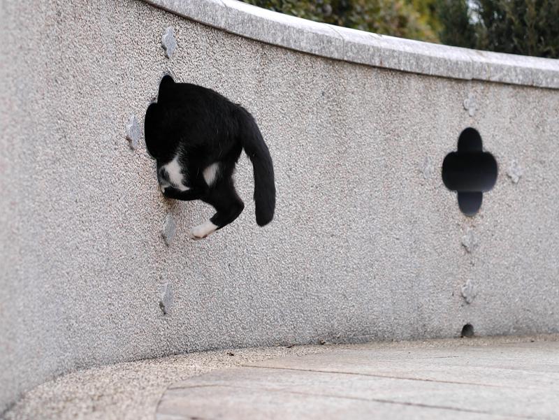 壁の飾り窓と黒白猫6